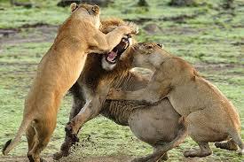 leos 2